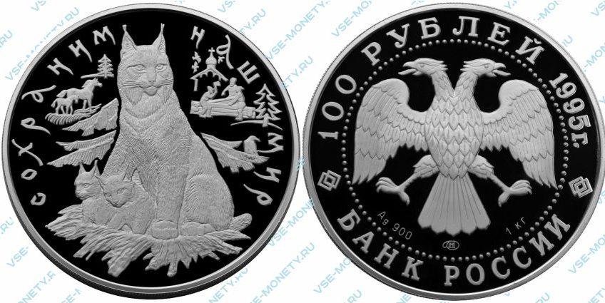 Памятная серебряная монета 100 рублей 1995 года «Рысь» серии «Сохраним наш мир»