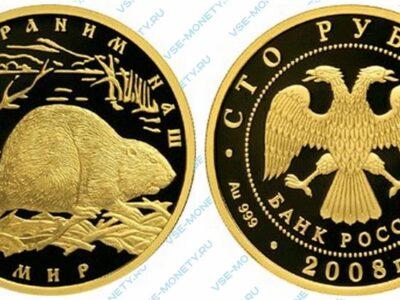 Юбилейная золотая монета 100 рублей 2008 года «Речной бобр» серии «Сохраним наш мир» в исполнении пруф (proof)