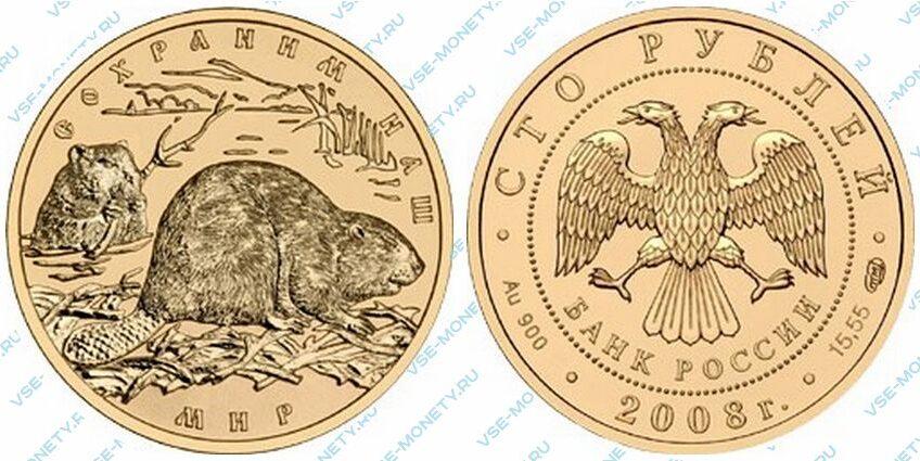 Юбилейная золотая монета 100 рублей 2008 года «Речной бобр» серии «Сохраним наш мир»