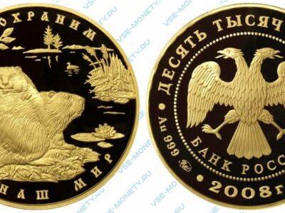 Юбилейная золотая монета 10000 рублей 2008 года «Речной бобр» серии «Сохраним наш мир»