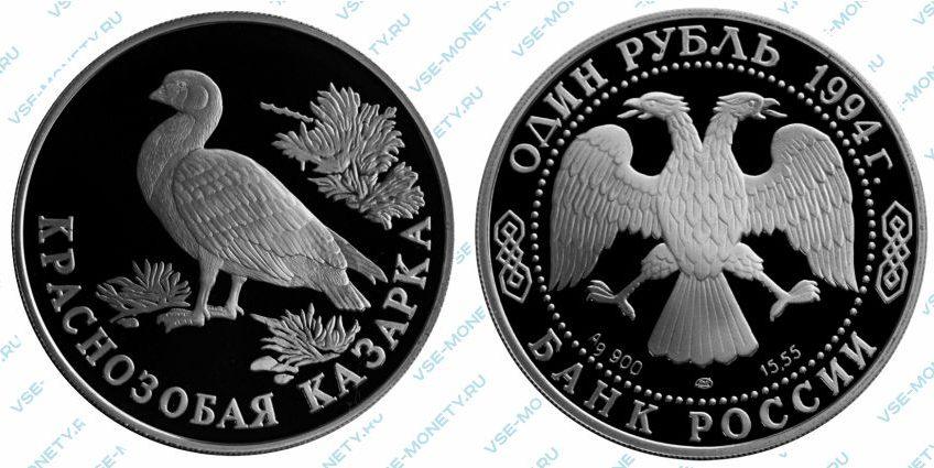 Памятная серебряная монета 1 рубль 1994 года «Краснозобая казарка» серии «Красная книга»