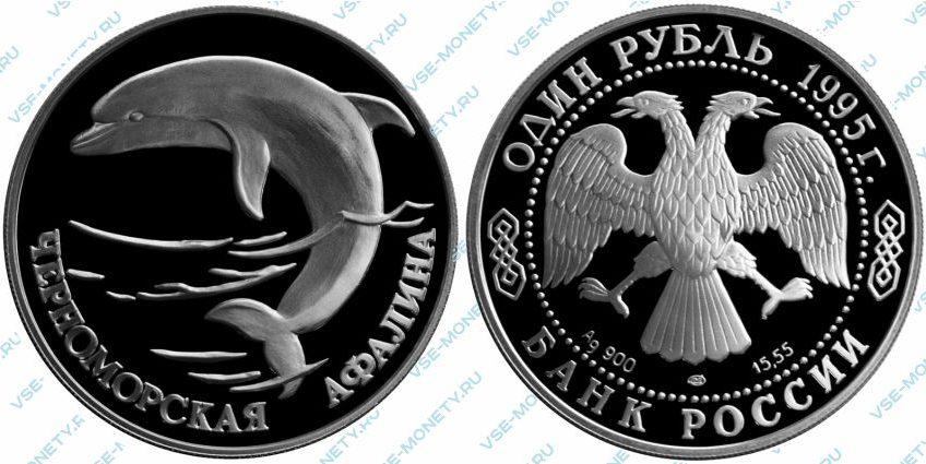 Памятная серебряная монета 1 рубль 1995 года «Черноморская афалина» серии «Красная книга»