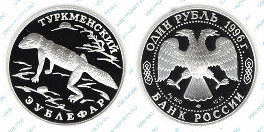 Памятная серебряная монета 1 рубль 1996 года «Туркменский эублефар» серии «Красная книга»