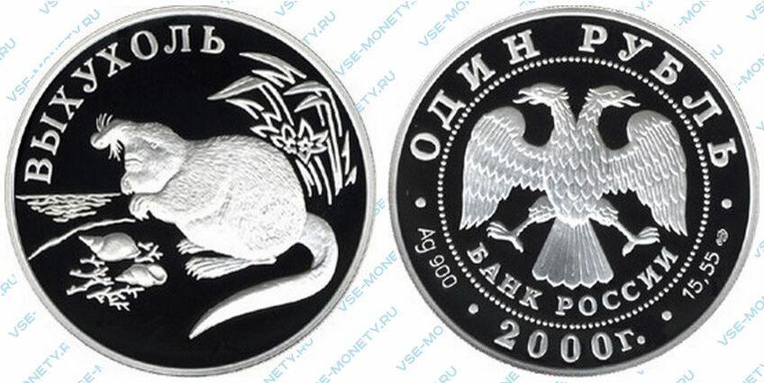 Юбилейная серебряная монета 1 рубль 2000 года «Выхухоль» серии «Красная книга»