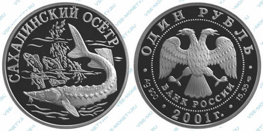 Юбилейная серебряная монета 1 рубль 2001 года «Cахалинский осетр» серии «Красная книга»