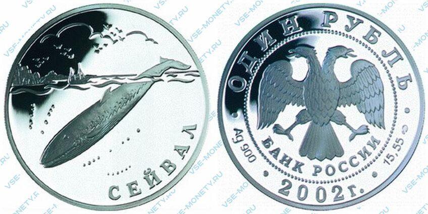Юбилейная серебряная монета 1 рубль 2002 года «Сейвал (кит)» серии «Красная книга»