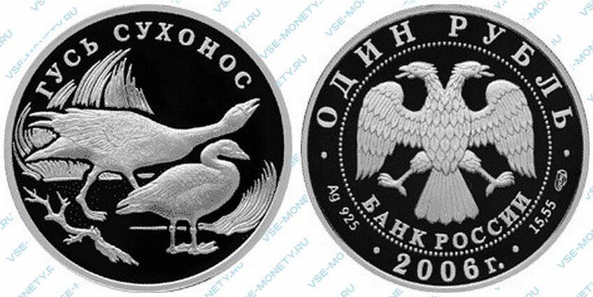 Юбилейная серебряная монета 1 рубль 2006 года «Гусь сухонос» серии «Красная книга»