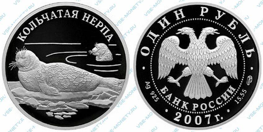 Юбилейная серебряная монета 1 рубль 2007 года «Кольчатая нерпа (ладожский подвид)» серии «Красная книга»