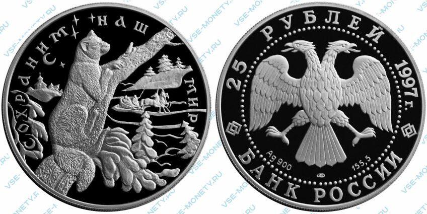 Памятная серебряная монета 25 рублей 1997 года «Соболь» серии «Сохраним наш мир»
