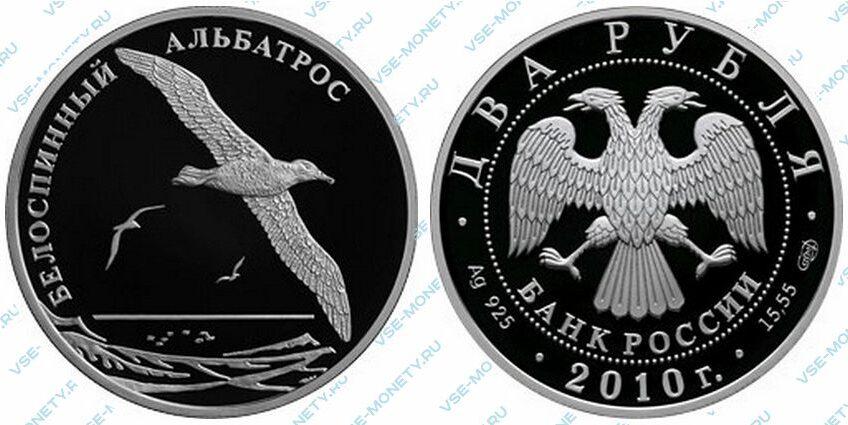 Юбилейная серебряная монета 2 рубля 2010 года «Белоспинный альбатрос» серии «Красная книга»