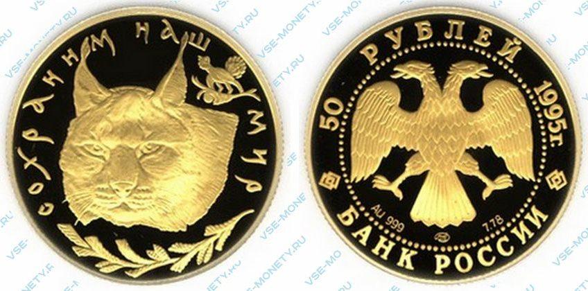 Памятная золотая монета 50 рублей 1995 года «Рысь» серии «Сохраним наш мир»