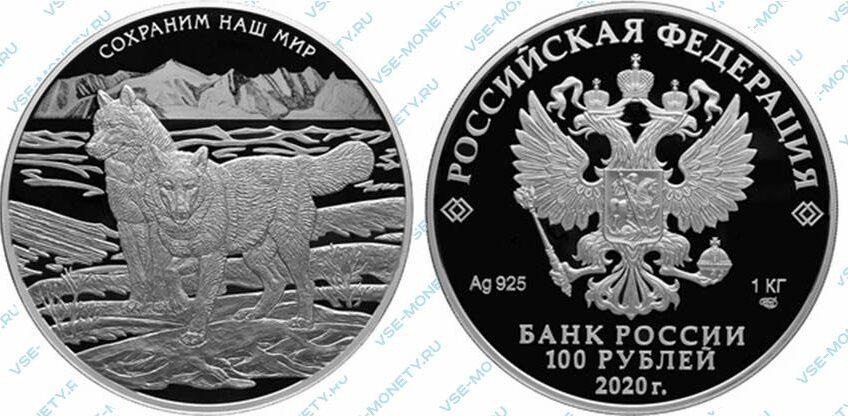Юбилейная серебряная монета 100 рублей 2020 года «Полярный волк» серии «Сохраним наш мир»