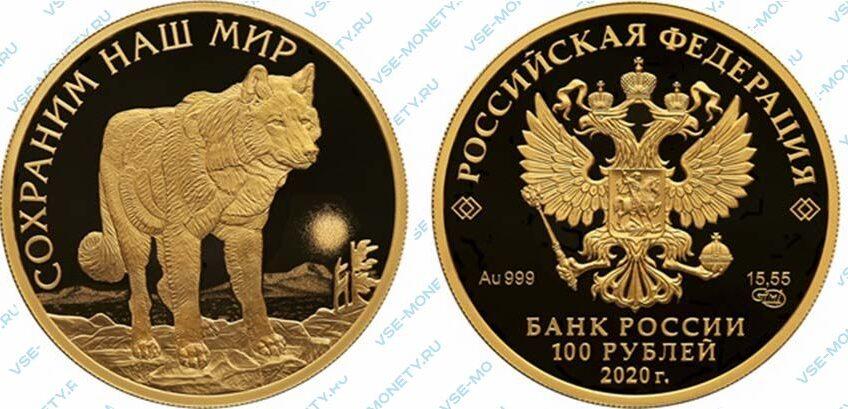 Юбилейная золотая монета 100 рублей 2020 года «Полярный волк» серии «Сохраним наш мир»