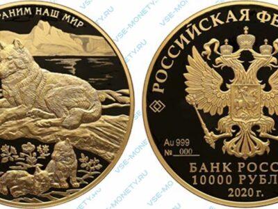 Юбилейная золотая монета 10000 рублей 2020 года «Полярный волк» серии «Сохраним наш мир»