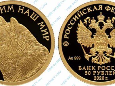 Юбилейная золотая монета 50 рублей 2020 года «Полярный волк» серии «Сохраним наш мир»